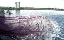 农业部召开渔业转型升级推进会 加快推进渔业转型升级