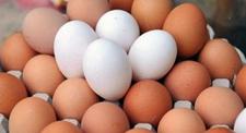 23日主流肉鸡市场价格走势分析