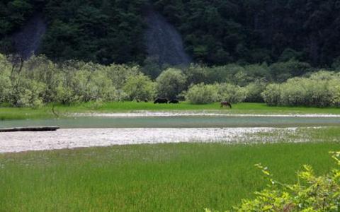 甘肃拟2020年实现湿地保护率达到60%以上
