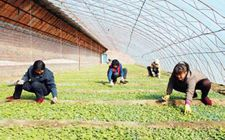 辽宁辽阳县积极完善农业科技成果转化应用快捷机制 助推现代农业发展