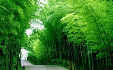 <b>江西省出台《关于加快林下经济发展的行动计划》 推进林下经济发展</b>