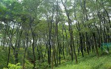 山东泰安市大力推进造林工程 城乡绿化整体水平明显提升