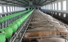 农业部公布170个不符合畜禽养殖规定的示范场 并取消其资格