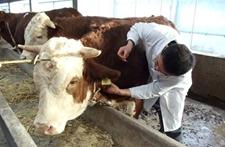 浙江萧山开展动物疫病防控和畜产品安全监管