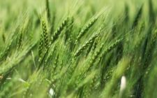 鼓励农村土地复合利用创新 促进农村一二三产业融合发展