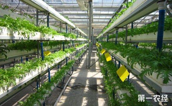 农科院:面向现代农业建设主战场  实施乡村振兴科技支撑行动