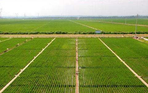 涿鹿县农业发展成效显着 农民人均纯收入突破万元