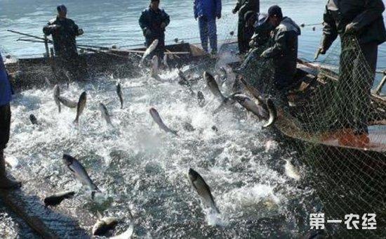 辽宁不断深化渔业供给侧结构   促进水产增养殖业持续健康发展