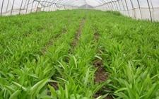 """江西鄱阳:重点抓好""""三冬""""工作 实现农业生产稳定高效"""