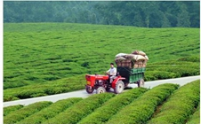 <b>汉中西乡县:电商助力产业发展 帮助农民增收致富</b>