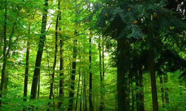 我国多项森林保护措施已经取得了巨大的综合效益