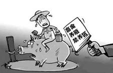 武汉市督查抽检新洲区畜禽退养工作