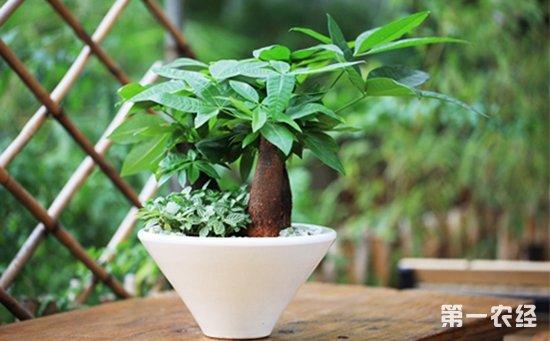 8种具有强大净化空气效果的盆栽植物介绍!分分钟打造室内氧吧