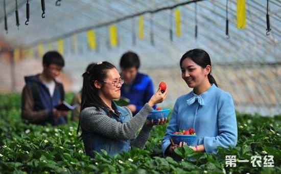 泰国清迈草莓节将于2月9日~11日举行