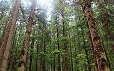 <b>四川省深化集体林权制度改革取得了显著的成效</b>