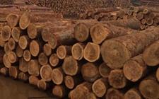 日本木材产品出口价值达40年来最高水平