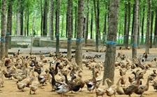 青岛胶州市畜牧执法专项整治行动