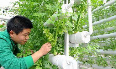 中国农科院将在今年开始实施实施乡村振兴科技支撑行动