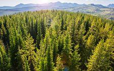 <b>国家林业局召开电视电话会议 对春节和两会林业安全生产工作进行部署</b>