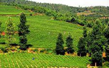贵州威宁县推进农业与大数据融合 大力发展现代农业