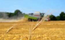 2017年各级农业部门目标任务圆满完成 高质量发展成为农业主攻方向