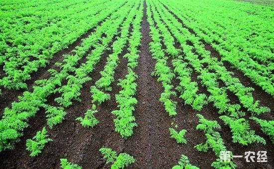 哈尔滨呼兰区优化农业种植结构促农增收