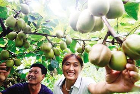 江西召开猕猴桃产区研讨会 产业发展带动村民致富