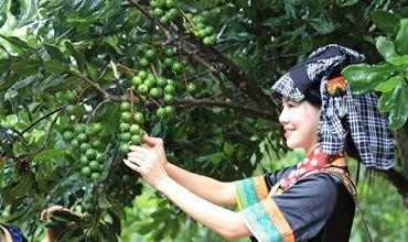 截至去年年底云南省林下经济经营面积达到6900万亩