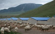 张掖大河乡发挥优势发展绿色畜牧业