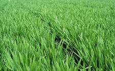 农业部:扎实做好2018年农业安全生产重点工作