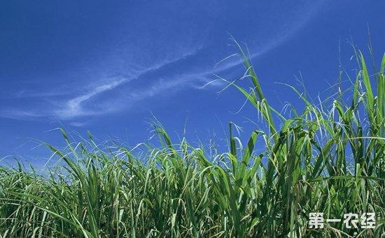 全面深化农村集体产权制度改革  为乡村振兴战略提供制度支撑