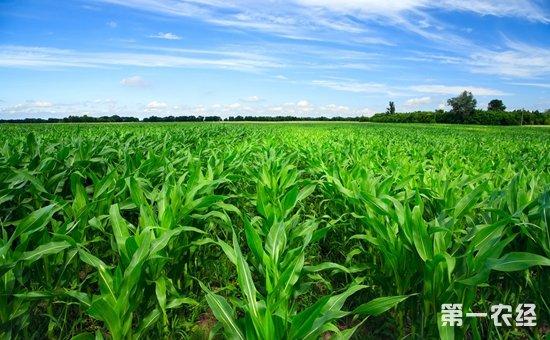 农业部:深入推进农业产业扶贫  打好脱贫攻坚战