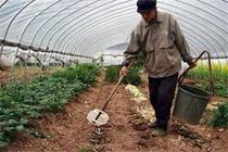 冬季大棚蔬菜浇水施肥要注意什么