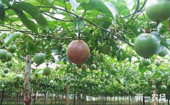 海南:推动特色农产品调优增效   加大品牌创建与培育力度