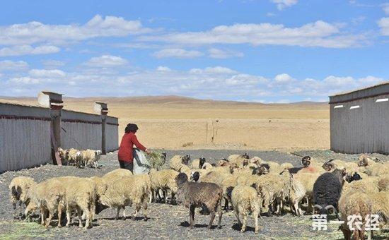 西藏农村居民人均可支配首次突破万元大关