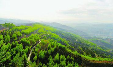 青海省2017年造林工程取得显著进展 造林面积首次突破400万亩