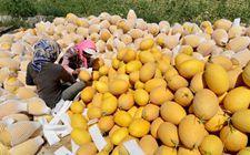 """<b>新疆:""""互联网+""""订单农业经销模式探索出一条精准脱贫的新路径</b>"""