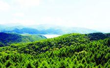 辽宁省今年将落实全面停止天然林商业性采伐政策