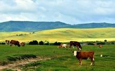 """<b>内蒙古:以""""乡村振兴战略""""为总抓手 推进农牧业现代化发展</b>"""