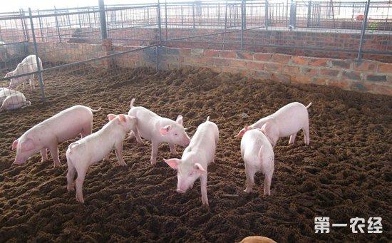 怎样搭建养猪圈?养猪圈搭建的关键点