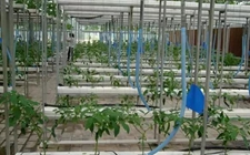 《关于推进农业高新技术产业示范区建设发展的指导意见》文件原文