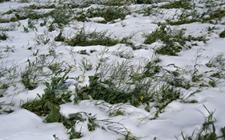 浙江组建831个救灾队助力农业恢复生产