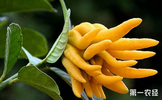 7种适合养在卧室里的盆栽植物介绍!净化空气改善睡眠