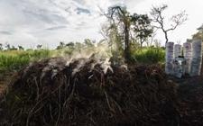 <b>非洲这个国家每年砍伐120万亩森林 五年里将会形成沙漠</b>