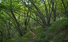 山西:推进森林康养产业发展 发挥森林康养价值