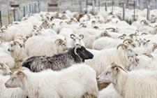 <b>农业部印发《2018年畜牧业工作要点》 重点抓好这七方面工作</b>
