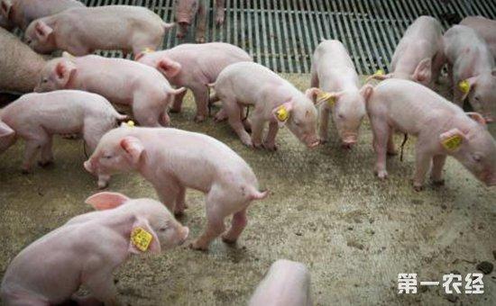 仔猪为什么会腹泻?仔猪腹泻的原因