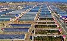 甘肃张掖:民乐县大力发展戈壁农业 持续壮大中药材产业