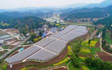 广西玉林市:探索推进现代农业产业园区建设