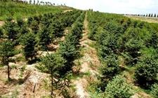 郑州:2018年将新造林8.67亩 创建省级森林城市启动